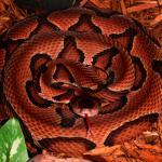 喬州蛇類季到 專家:遇蛇時保持冷靜 盡速離開