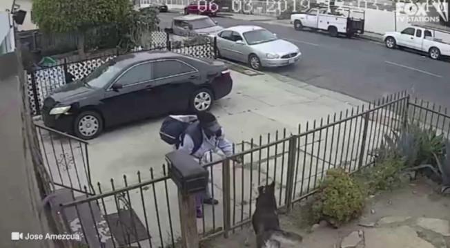 一隻愛斯基摩犬只是在鐵欄杆後面看著一名女郵差,結果被噴辣椒劑。(監視器畫面)