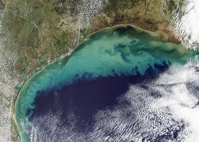 美國航空暨太空總署的衛星照片顯示,圖中淡綠色海域就是墨西哥灣的「死亡區」。(取自NASA網站)