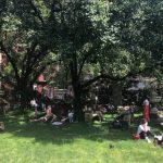伊利沙白街花園建案 市議會委員會過關