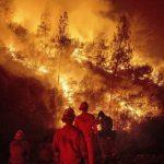 調查出爐!男子除黃蜂 釀加州史上最大野火