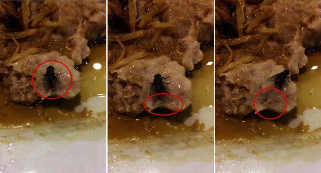 香港一名網友在外用餐時,一隻蒼蠅飛來停在食物上,並當面產下一窩白蛆。(影片截圖)