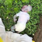 逼真玩偶被當成死去的嬰兒報案 虛驚一場