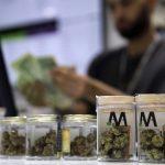 呼麻駕車嚴重 維州、馬州大麻合法化再惹議