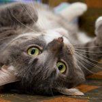 禁止切除貓爪…紐約州首先實施 反對派批治標不治本