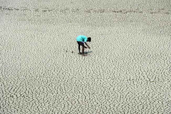 一名印度童子軍5月21日走在市郊已乾涸的Chembarambakkam湖床尋找泥蟹與蛇頭魚。包含Chembarambakkam湖的清奈傳統4大水庫已接近全面乾涸,民生用水極度短缺。(Getty Images)