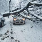 華男遭路樹壓傷 提告市府求償