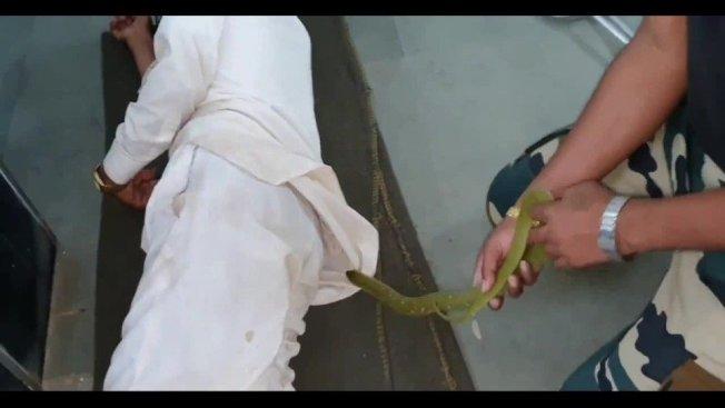 印度中部馬哈拉什特拉邦(Maharashtra)艾哈邁德訥格爾市(Ahmednagar),一名男子在當地醫院加護病房陪親友、席地而睡,結果一條蛇爬入他的衣服內,醫院方見狀趕緊找來捕蛇專家抓蛇,但最扯的是,這名男子雷打不動,頭睡到尾,絲毫沒有反應,讓周遭病人、家屬和醫療人員看傻眼。路透