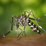 新州春雨助長蚊蟲孳生 今夏防傳染病肆虐