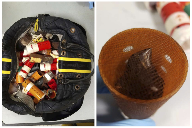 一名男子從圭亞那走私34隻雀鳥塞進手提行李箱的塑膠髮捲中,在甘迺迪機場被發現。左圖顯示被用來走私鳴鳥的髮捲,右圖為塞在髮捲裡的鳥。(美聯社)