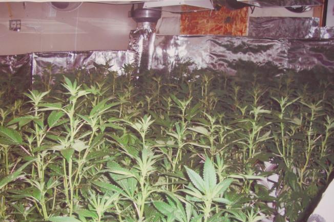 六名華裔涉嫌利用中國的巨額現金在沙加緬度地區購屋非法大量種植大麻,已被聯邦司法部起訴洗錢等刑事罪名。(本報檔案照片)