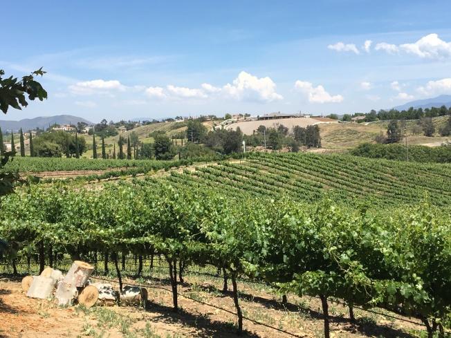 坦密庫拉市被譽為葡萄酒國,有數千英畝葡萄園及數十家酒莊。(記者啟鉻/攝影)