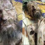 棕熊襲擊俄男 留活口當「儲糧」1個月慘況曝光
