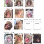 竟自己拿鑰匙開門!沖繩動物園14隻脫逃猴全數捕獲