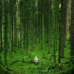 憂鬱、睡不好?去森林走一趟 證實能減壓