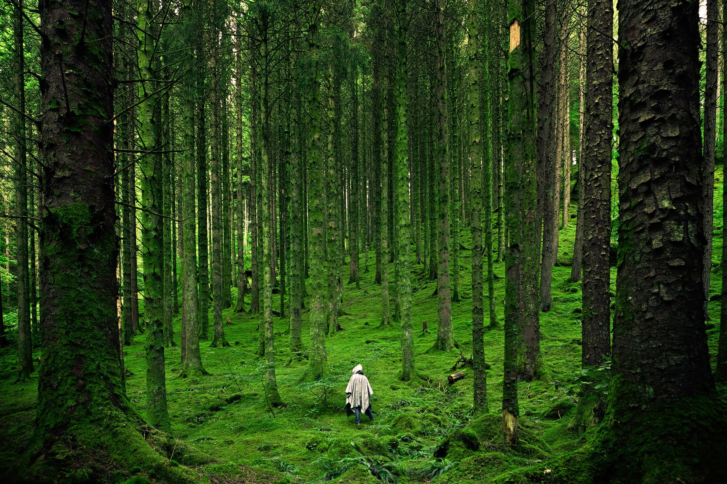 森林浴有助改善健康。(Unsplash)