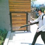 加州連兩次大地震 賭城地區「蟲蟲四竄」超嚇人