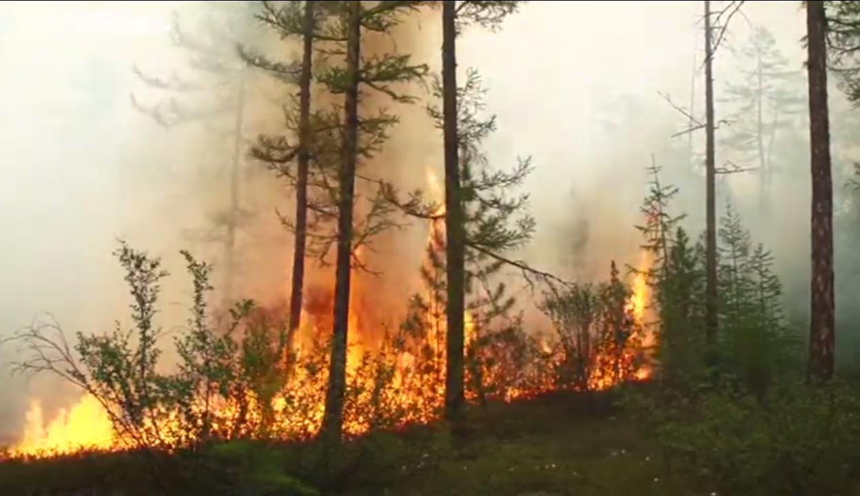 猛烈的森林野火每年都會肆虐俄羅斯西伯利亞大片地區,但今年火勢規模達到異常等級,恐對環境造成長期影響。圖取自影片截圖