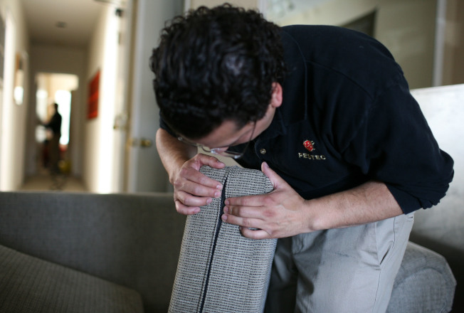 床墊表面、側面和接縫,通常是臭蟲最活躍的地帶。(Getty Images)