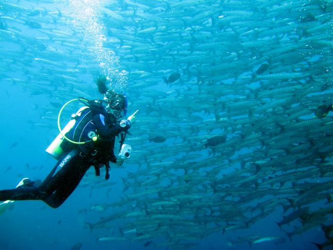 潛水就是海底旅遊。(圖:馮文靜提供)