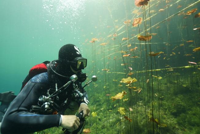 潛水者可以看到不一樣的風景。(圖:馮文靜提供)