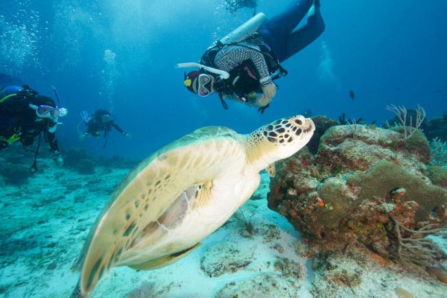 潛水者在海底能夠遇到海龜。(圖:馮文靜提供)