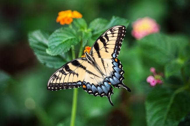 德國研究機構指出,占地球物種2/3的昆蟲,正以驚人速度消失。示意圖/圖:pixabay