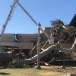 巴博亞公園樹倒 星光碗劇場遭殃