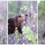 活膩了?俄男偷踹野生棕熊屁股 下一秒後悔