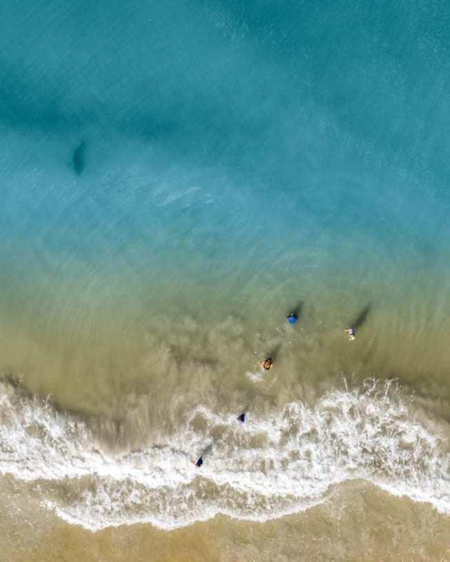 空拍機傳回來的影像發現,沙魚就在離華生一家人不遠處。(取材自 BuzzFeedNews)
