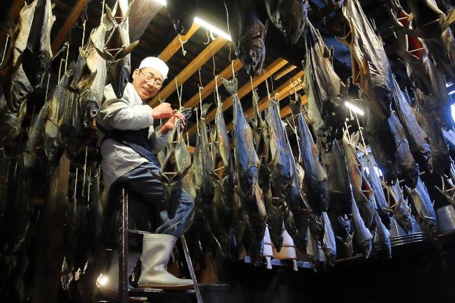 鮭魚必須不斷調整位置,才能達到最佳的風化狀態。記者陳睿中/攝影