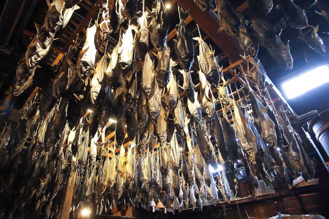 千年鮭きっかわ每年生產約1.1萬~1.2萬隻鮭魚,通通都是手工製作。記者陳睿中/攝影