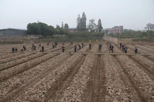 良渚文化考古現場。(取材自澎湃新聞)