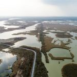 挽救「瀕危鳥類」 黃海候鳥棲息地也列世界遺產