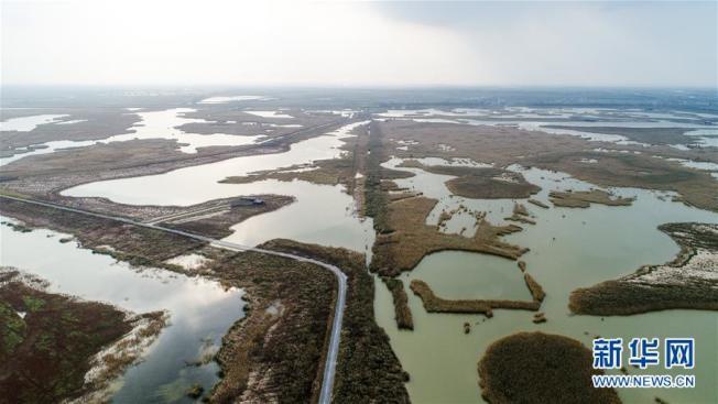江蘇鹽城濕地珍禽國家級自然保護區。(取材自新華網)