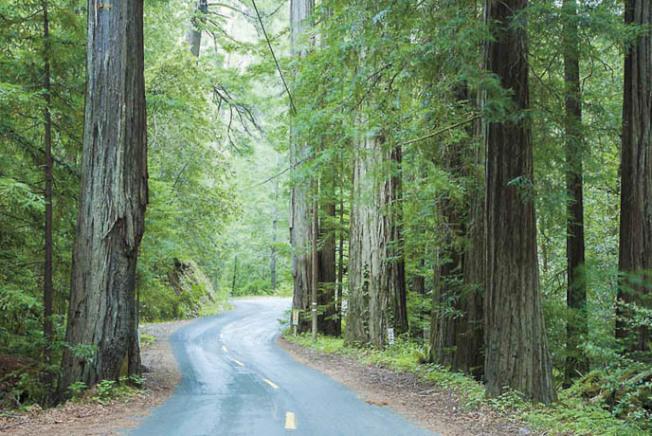 北灣蘇諾瑪縣的紅木公園。(Getty Images)