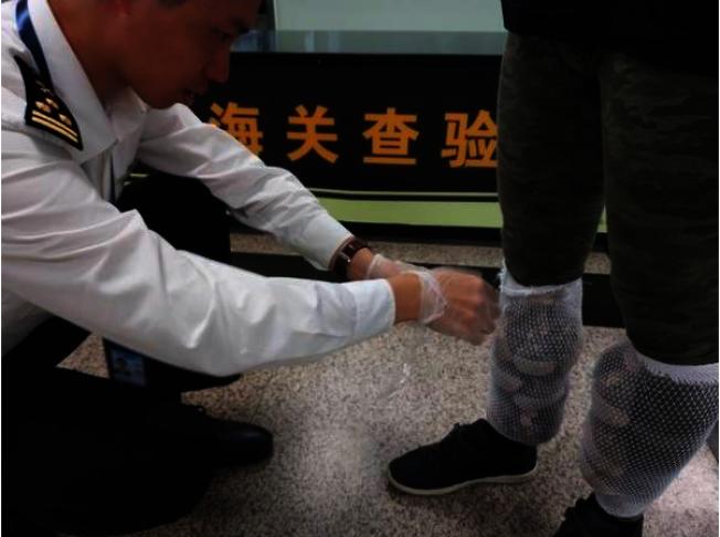 厦门海关查获台籍旅客捆绑在小腿部的蜜袋鼯。(翻摄自法制网)