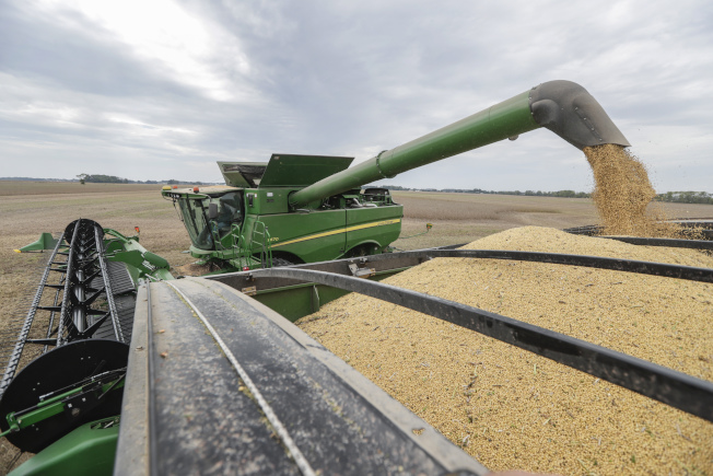 川普指控中方不守信,未購買美國農產品,圖為印第安納州豆農正在收穫作物。(美聯社)