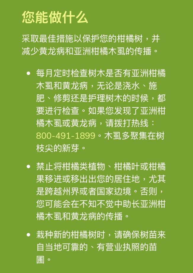 加州柑橘害蟲和疾病預防計劃(http://californiacitrusthreat.org/chinese),由加州食品與農業局負責管理,有中英文網頁請民眾幫助預防黃龍病。