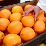 時代故事|柑橘黃龍病 中國人命名