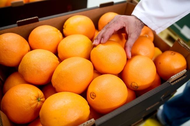 埃及出口到中國的柑橘日益增加。(新華社)