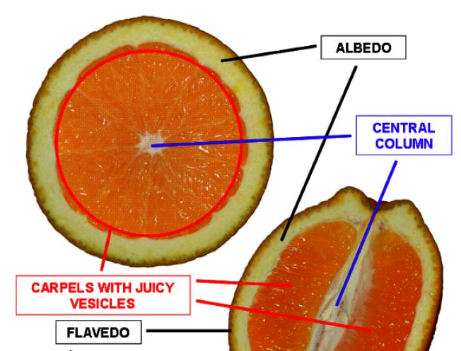橘子皮的白色部分有助於抗癌。(wikipedia)