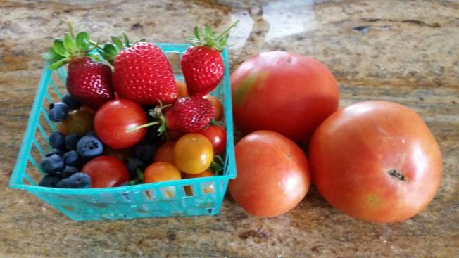 莊太太每天都很享受與「果菜小孩」的時光。(記者謝雨珊/攝影)