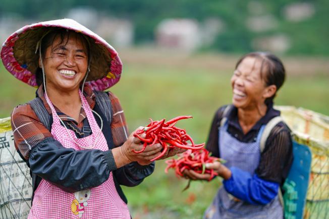 新鮮辣椒可以抗氧化、抗發炎、加速新陳代謝。(中新社)