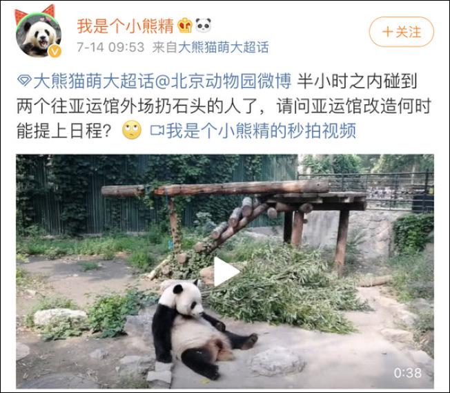 網友為「萌大」發聲,要求北京動物園加強貓熊安全防護措施。(取材自觀察者網)