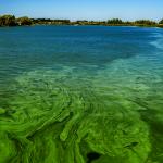 藍藻細菌氾濫… 新州綠木湖泳區關閉