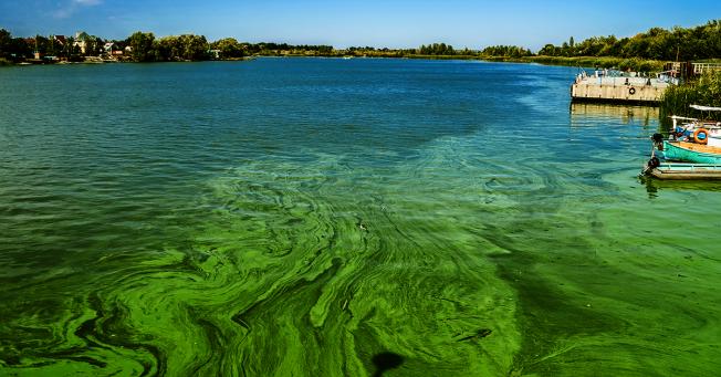 新州多個湖泊陷藍藻危機。(網路圖片)