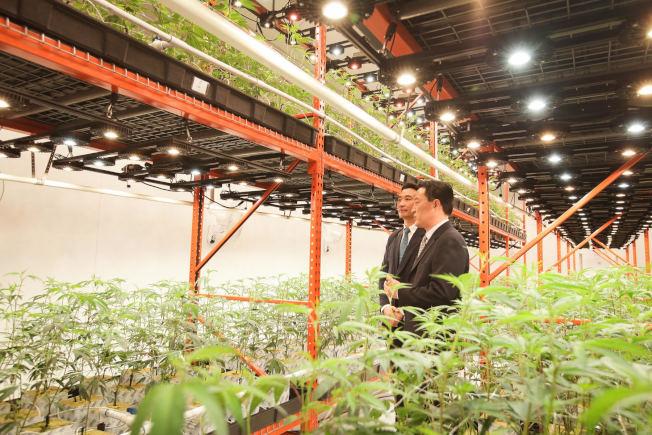 律師出身的James Chung和Conrad Yun雙雙自哈佛畢業,如今開設洛市首家漢麻種植場。(圖片由James Chung提供)