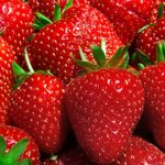 戴維斯加大培育新品種草莓