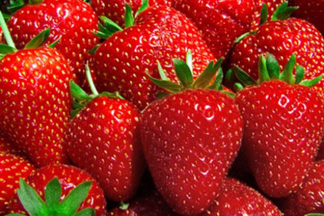 戴維斯加大(UC Davis)農業專家培養的加州草莓。(電視新聞截圖)